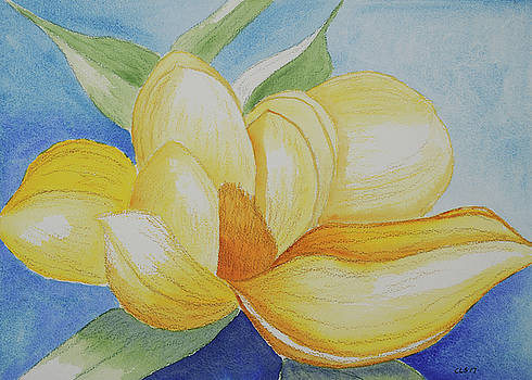 Magnolia Blossom at Mid-Day by Cynthia Schoeppel