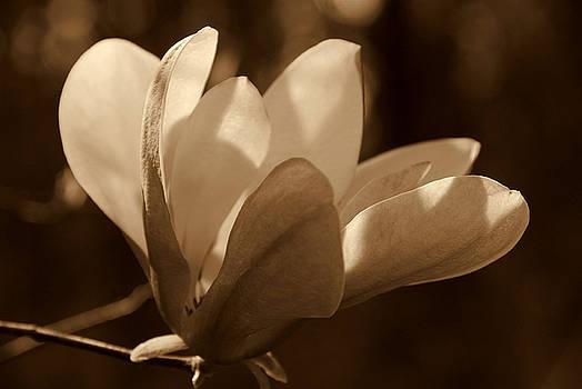 Susanne Van Hulst - Magnolia Blossom BW
