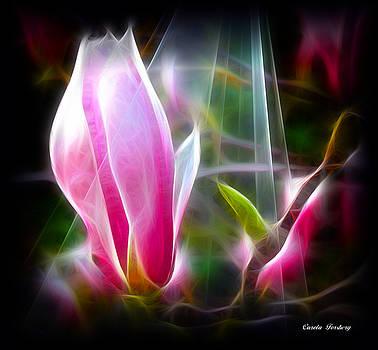 Magnolia  by Carola Ann-Margret Forsberg