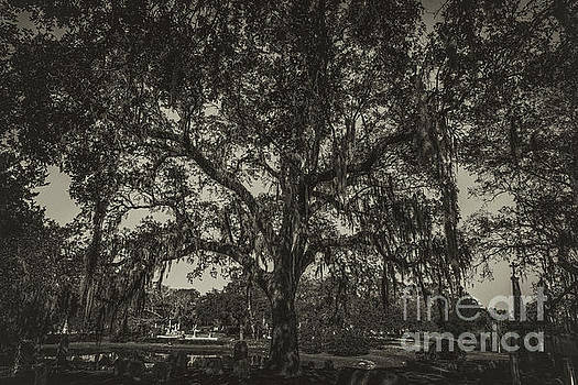 Dale Powell - Magnolia Cemetery Live Oak Tree in Sepia