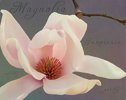 Magnolia by Deborah Kolesar