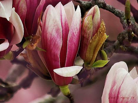 Magnolia Floral Branch by Carol F Austin