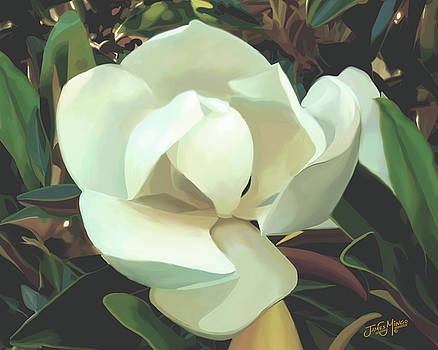 Magnolia Flower 2 by James  Mingo