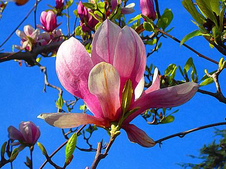 Amy Vangsgard - Magnolia Flower