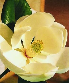 Magnolia Flower by Iris  Mora
