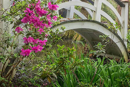 James Woody - Magnolia Gardens