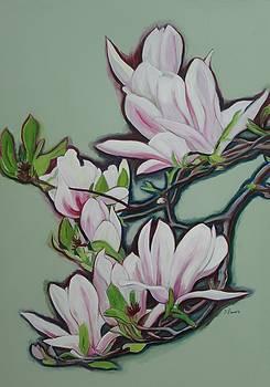 Magnolias II by Sheila Diemert