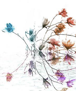 Magnolia by Jacky Gerritsen