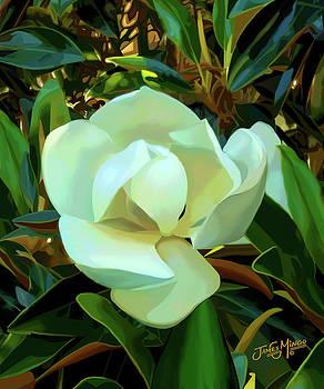Magnolia by James  Mingo