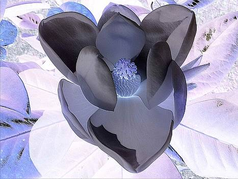 Magnolia Magic by R and E Photography