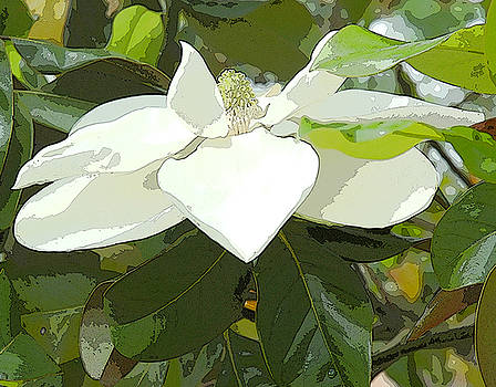 Magnolia by Margie Middleton