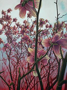 Magnolia by Maria Rizzo