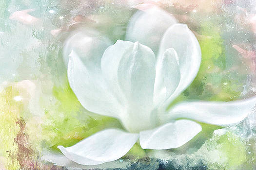 Magnolia Meditation  by Connie Handscomb