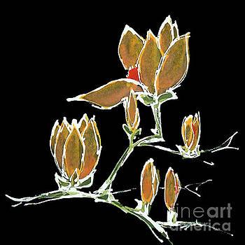 Magnolia-Orange by Chris Paschke