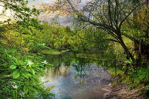Magnolia Overlook in Summer by Debra and Dave Vanderlaan