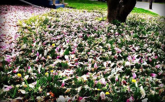 Frank J Casella - Magnolia Petals on the Lawn