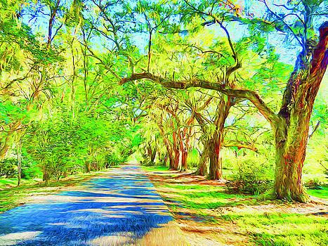 Dennis Cox - Magnolia Plantation Oaks