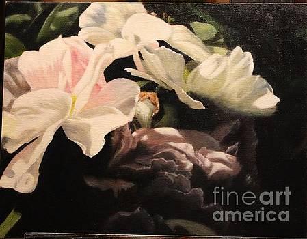 Magnolia by Sid Ball