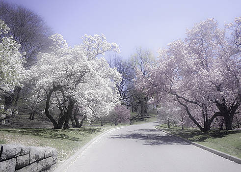 Julie Palencia - Magnolia Time New York Botanical Garden