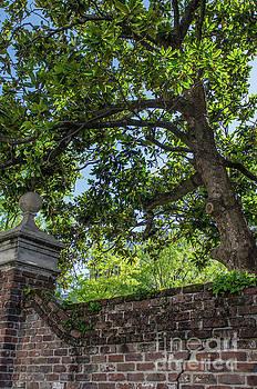 Dale Powell - Magnolia Tree and Charleston Brick