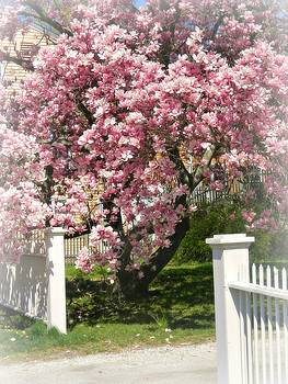 Magnolia Tree by Diane Valliere