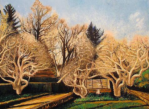 Magnolia trees by Vladimir Kezerashvili
