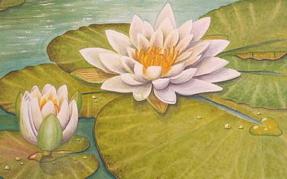 Magnolia waterlily by Elizabeth H Tudor