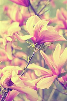 Magnolias by Angela King-Jones
