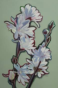 Magnolias III by Sheila Diemert