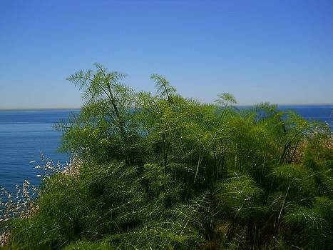Maidenhair Ferns by the Sea by Eve Paludan
