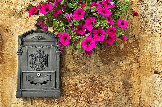 Silvia Ganora - Mailbox with petunias