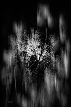 Maine Abstract by Bob Orsillo