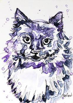 Maine Coon in Purple by Shaina Stinard