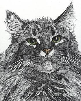 Maine Coon by Jennefer Chaudhry