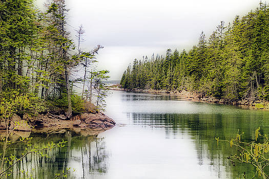 Maine Cove  by Betty Pauwels