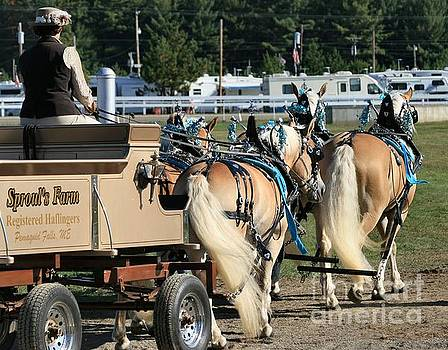 Sandra  Huston - Maine Haflinger Draft Horse