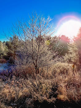 Maine Morning Frost by Guy Whiteley