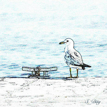 Maine Seagull by Sandra Day