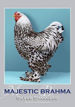 Majestic Brahma Silver Spangled by Sigrid Van Dort