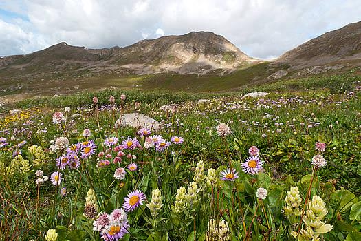 Majestic Colorado Alpine Meadow by Cascade Colors