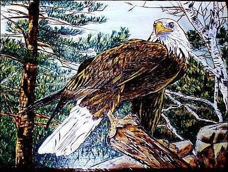 Majestic Eagle by Danette Smith