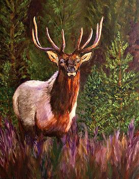 Mary Jo Zorad - Majestic Elk