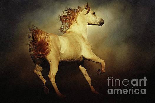 Majestic Horse by Dimitar Hristov