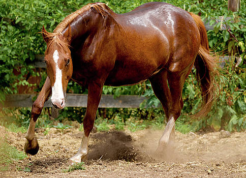 Julie Niemela - Majestic Horse