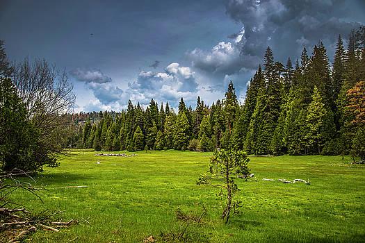 Majestic Meadow by Khalid Mahmoud