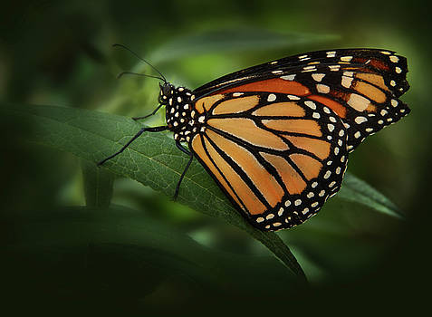 Majestic Monarch by Marie Leslie