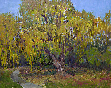 Majestic Willow by Anthony Sell