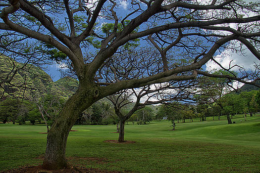 Makaha Valley Golf Course View by Debby Richards