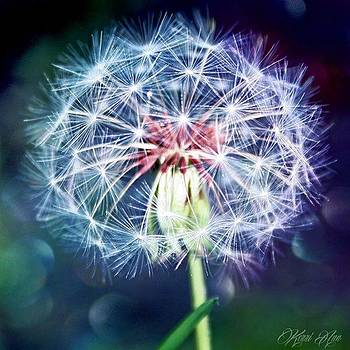 Make A Wish! 💜💜#allnatureshot by Kerri Ann Crau