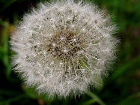 Sherri Williams - Make a Wish